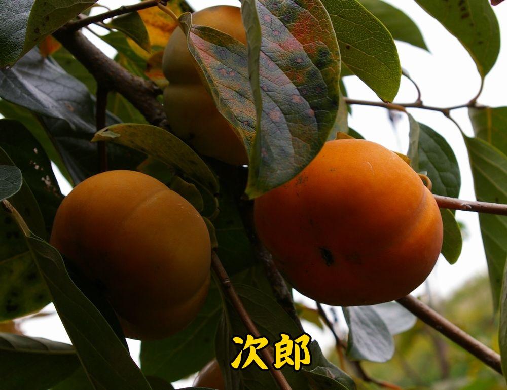 1jiro1019c1.jpg