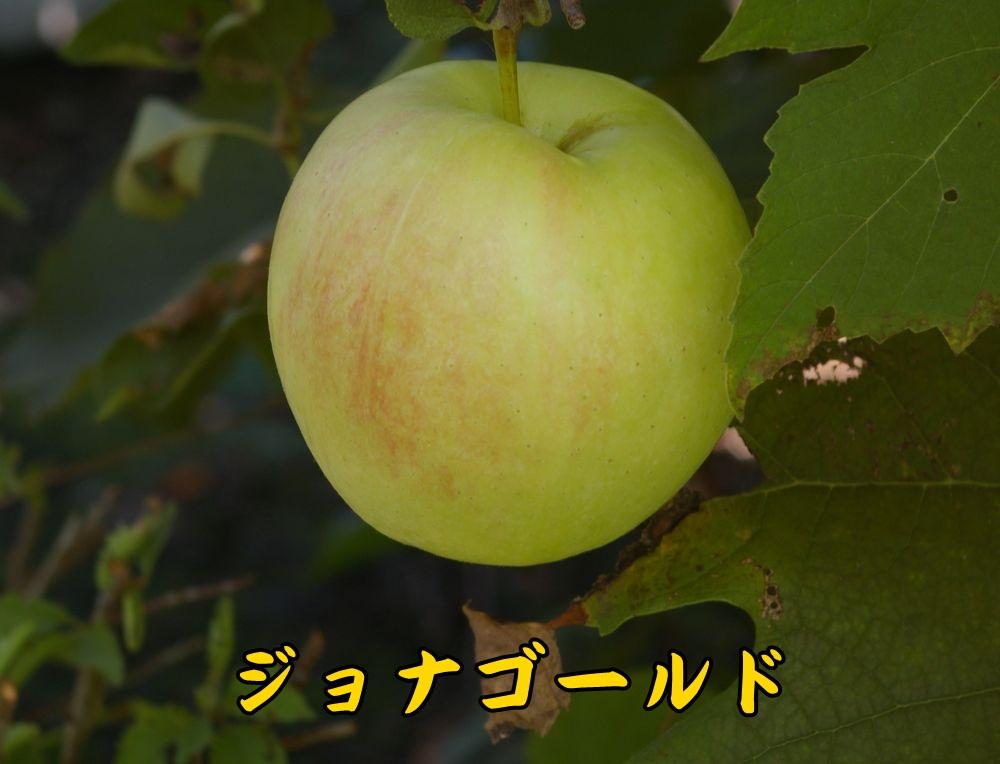 1jyonaG1012c1.jpg