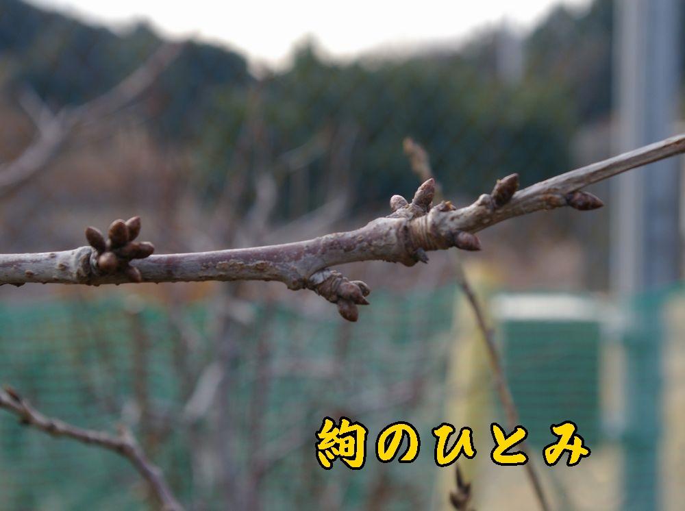 1jyunnohitomi0118c1.jpg