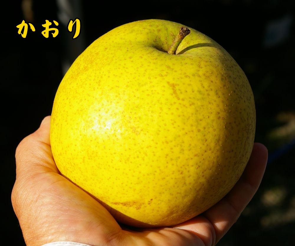 1kaori0921c1.jpg