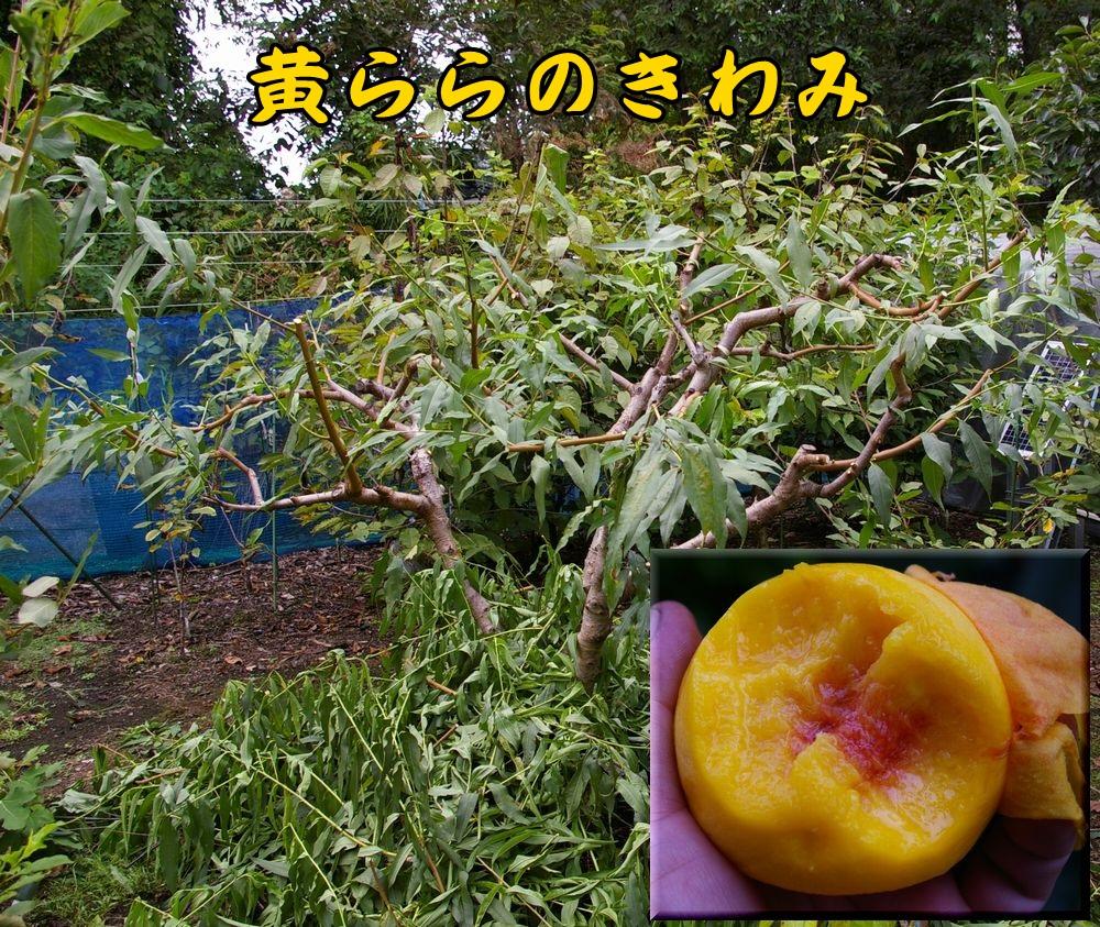 1kiraranokiwami0910c1.jpg