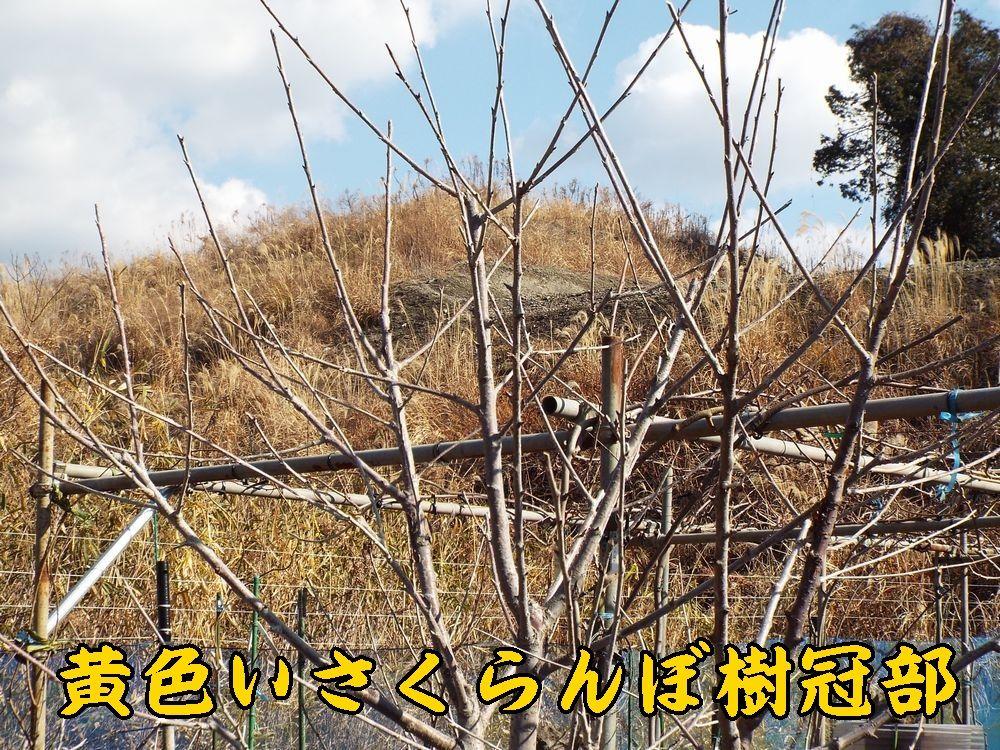 1kiroi0112c2.jpg