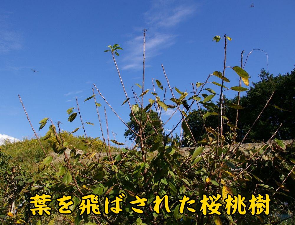 1kiroi1017c1.jpg