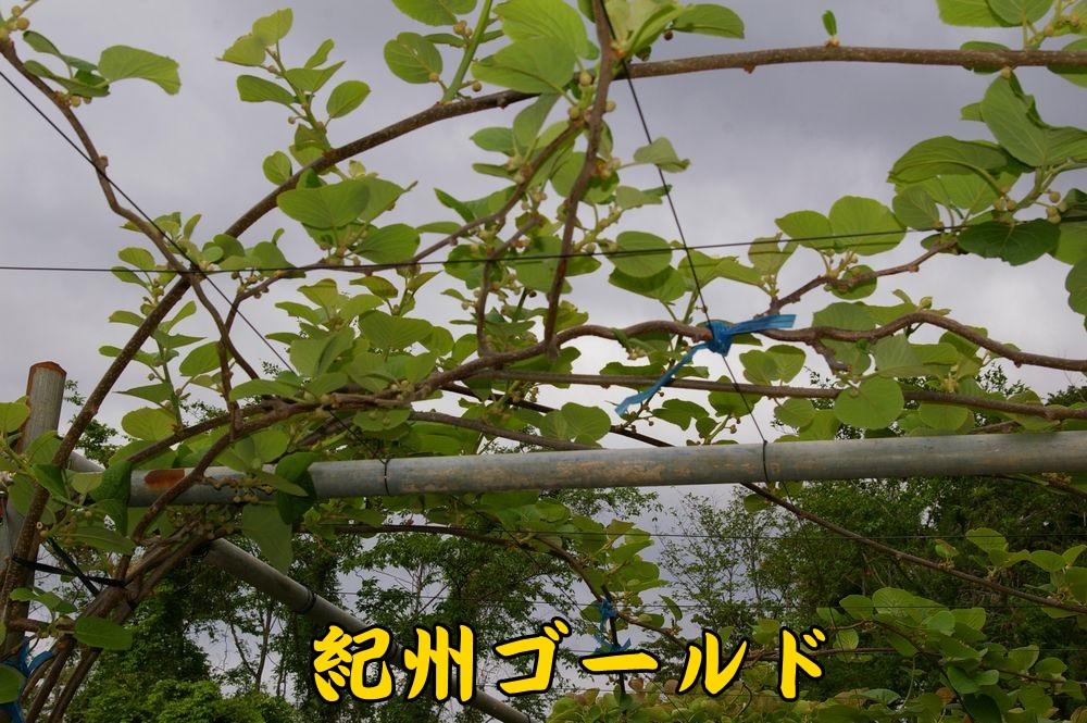1kisyu0419c1.jpg