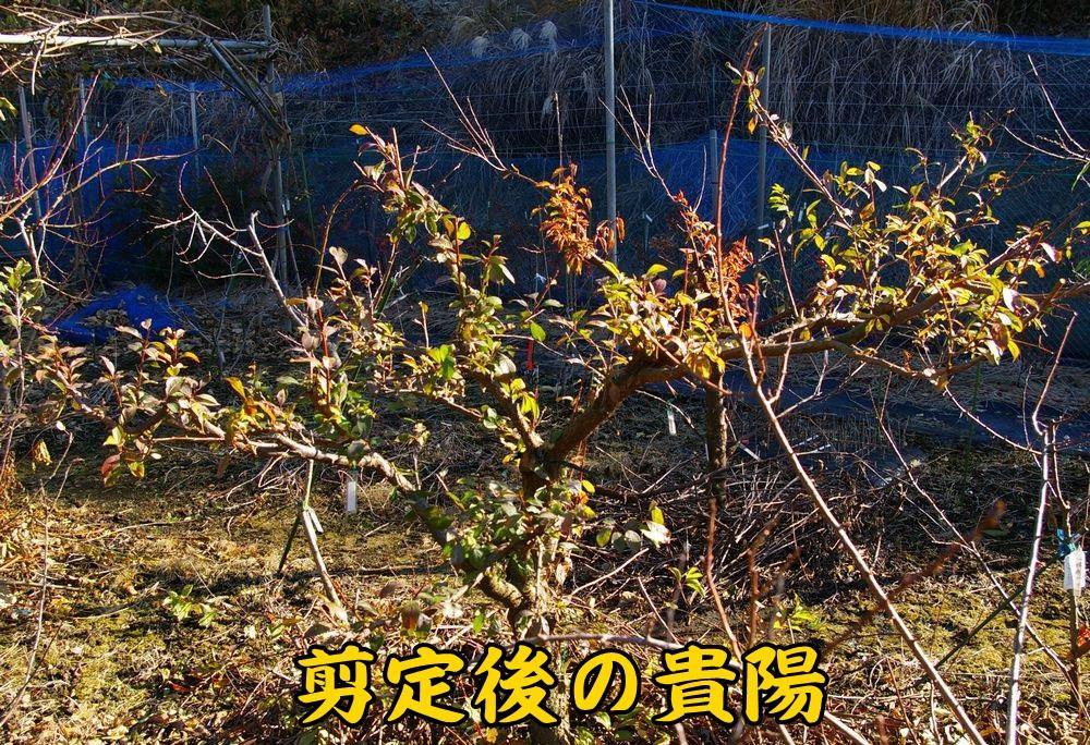 1kiyo1215c1.jpg