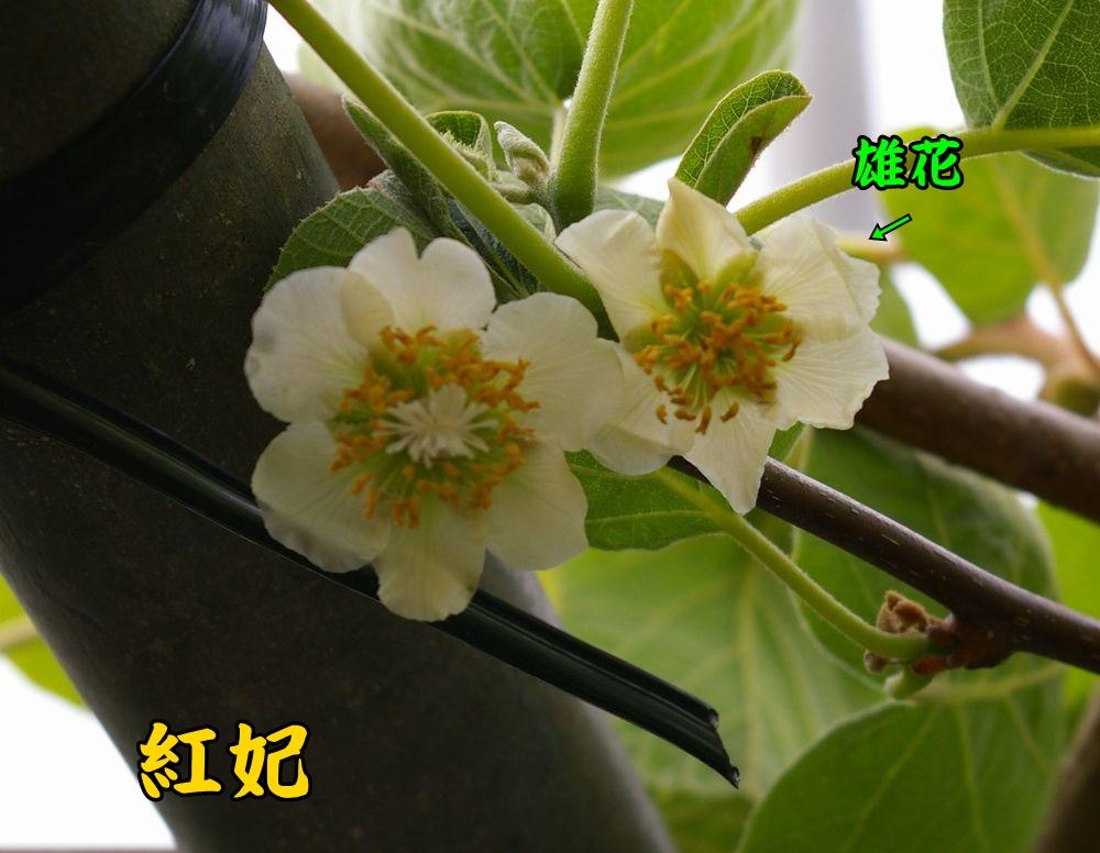 1kouhi0419c2.jpg