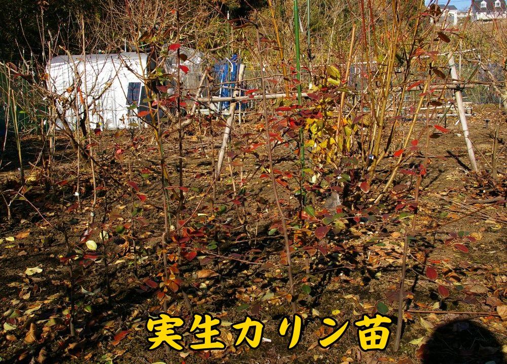 1misyou1215c1.jpg