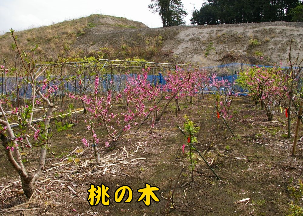 1momo0401c1.jpg
