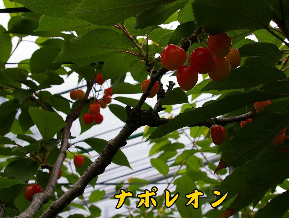 1napole0612c1.jpg