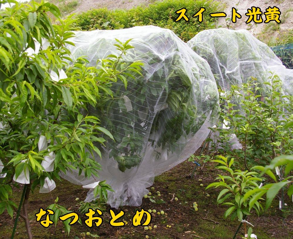 1natuoto_SW0522c1.jpg