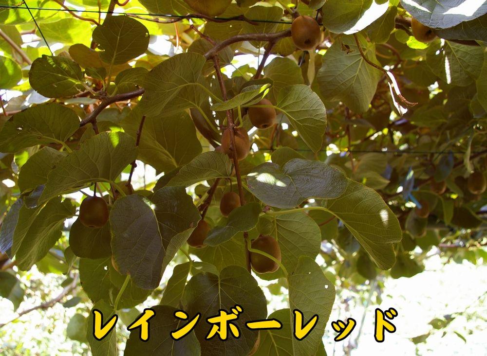 1rainbow1006c1.jpg