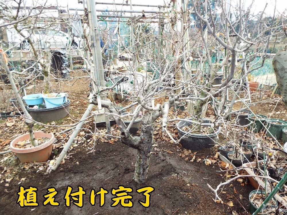 1rakufuji0108c8.jpg