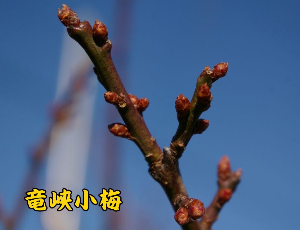 1ryukyou1228c1.jpg