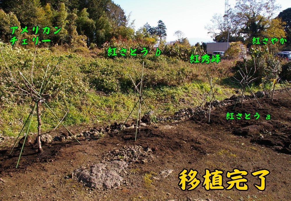 1sakura1214c1.jpg