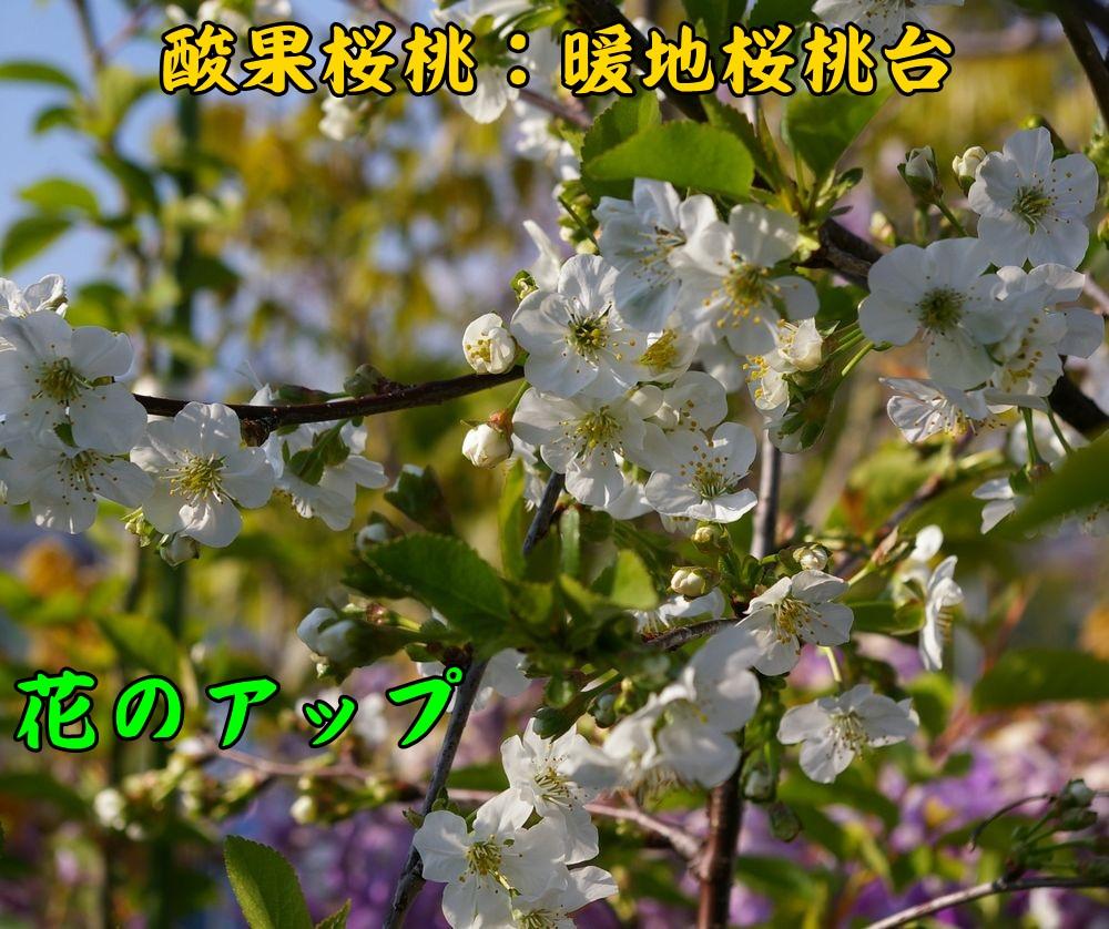 1sanka041c3.jpg