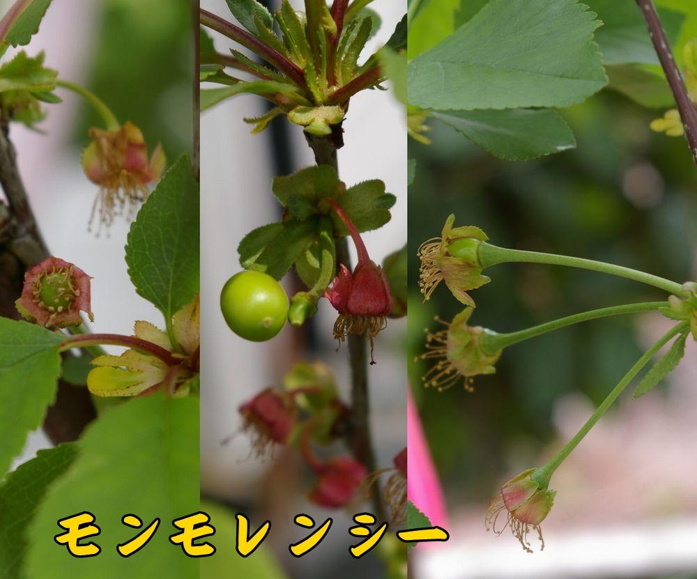 1sanka0425c1.jpg