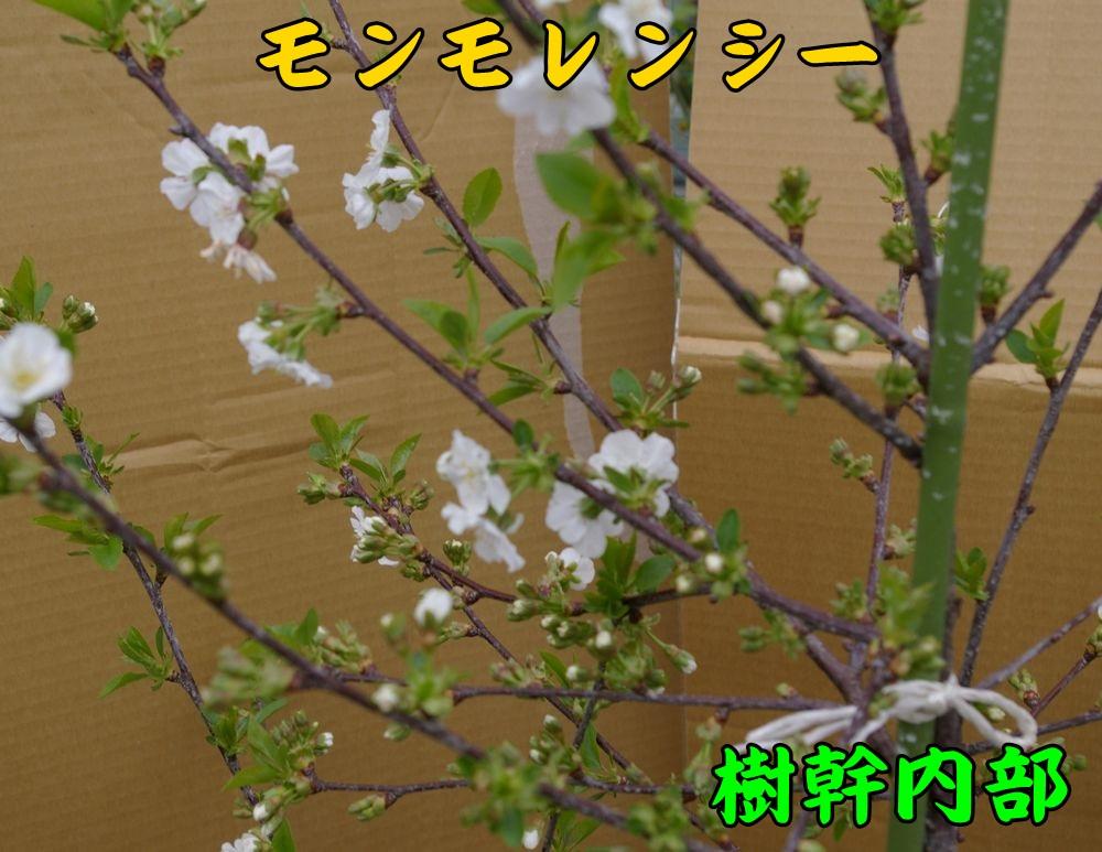 1sanka04c2.jpg
