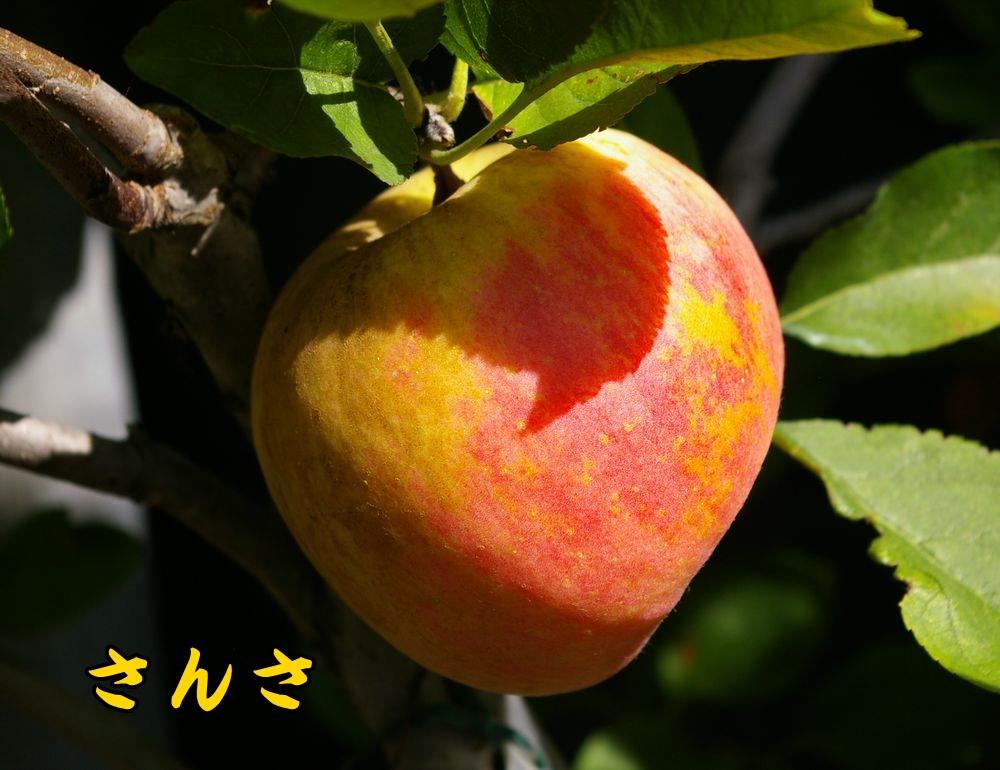 1sansa0921c1.jpg