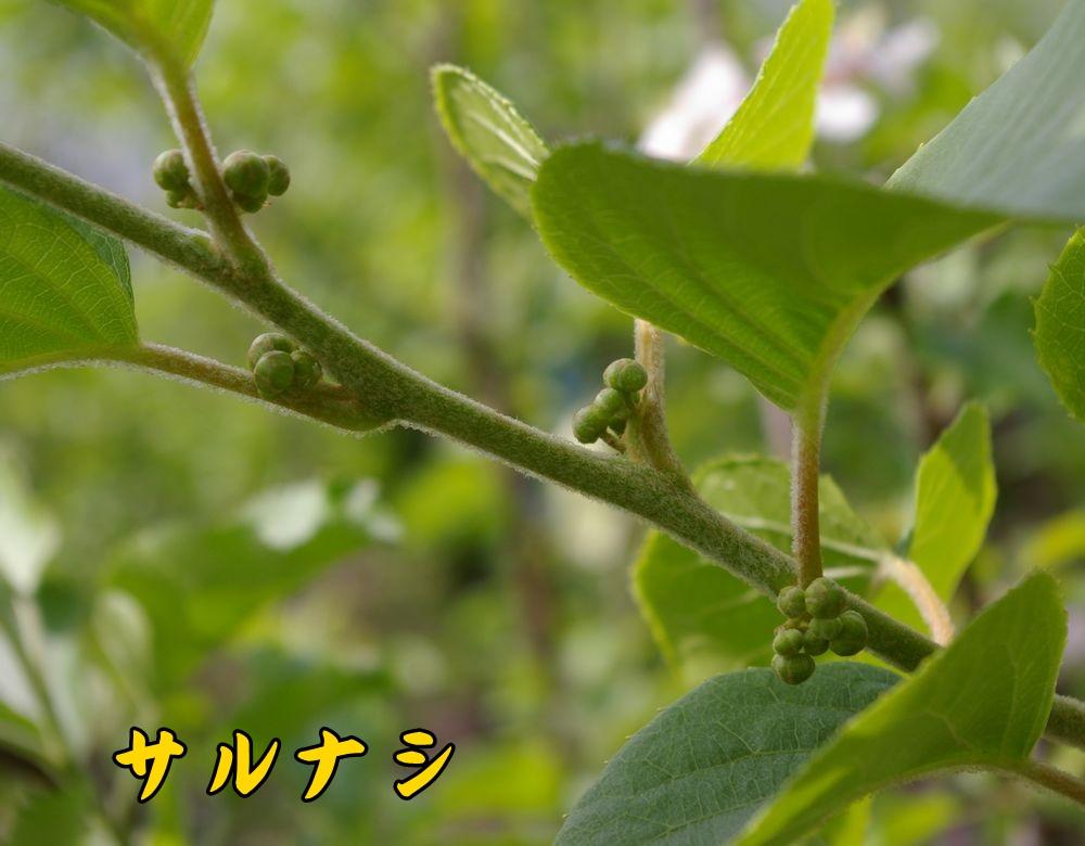 1sarunasi0419c1.jpg