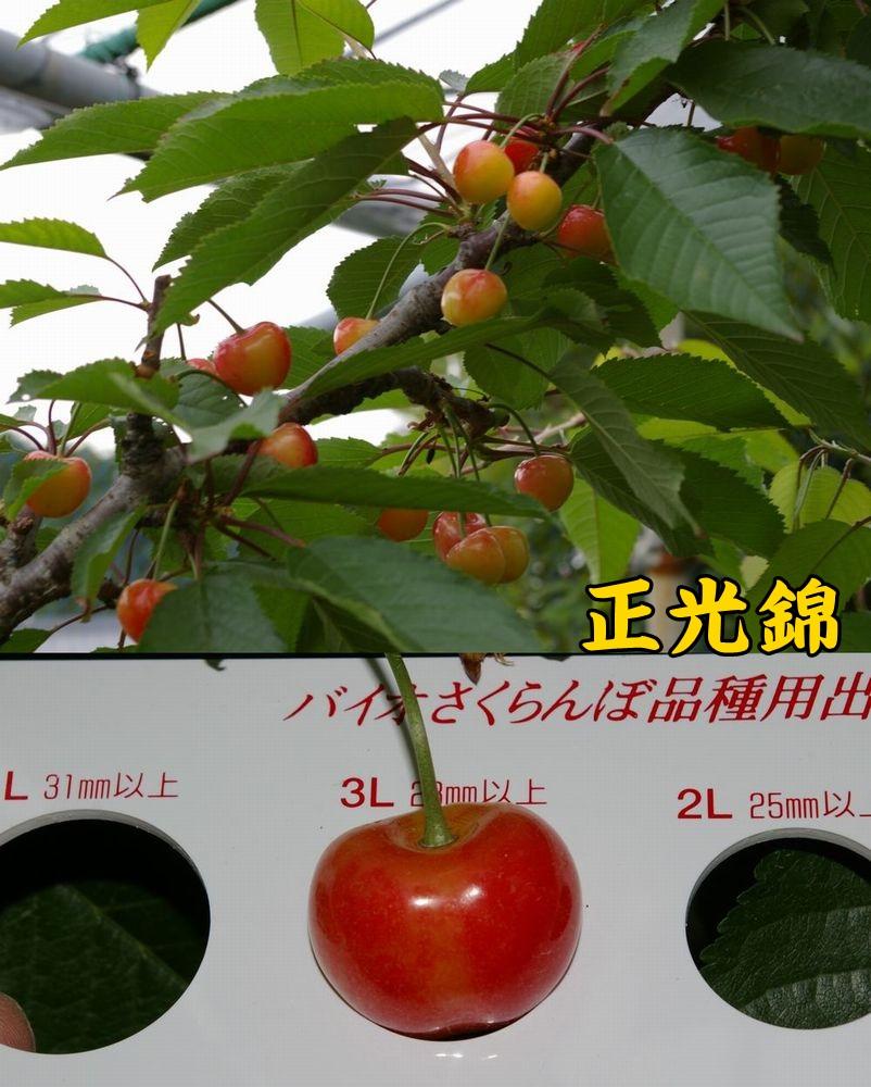 1seikou0523c1.jpg