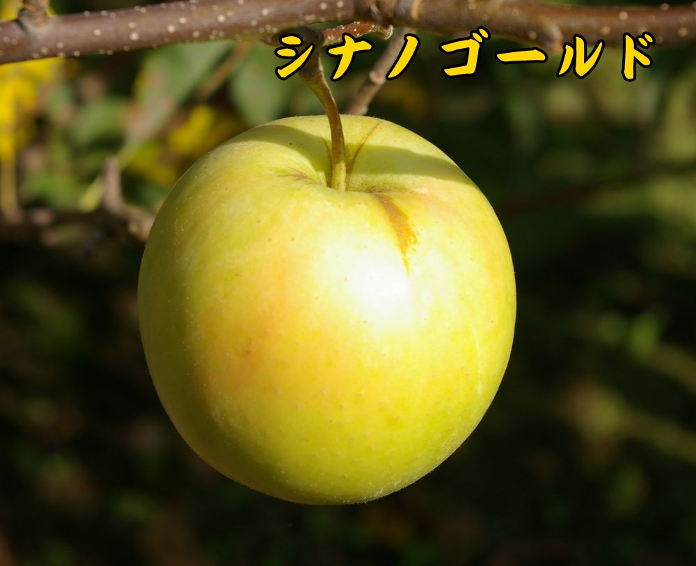 1sinanoG0921c3.jpg
