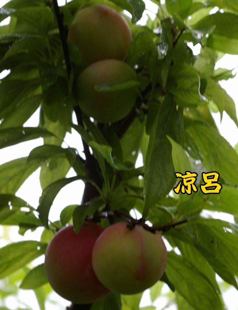 1suzuro0621c1.jpg