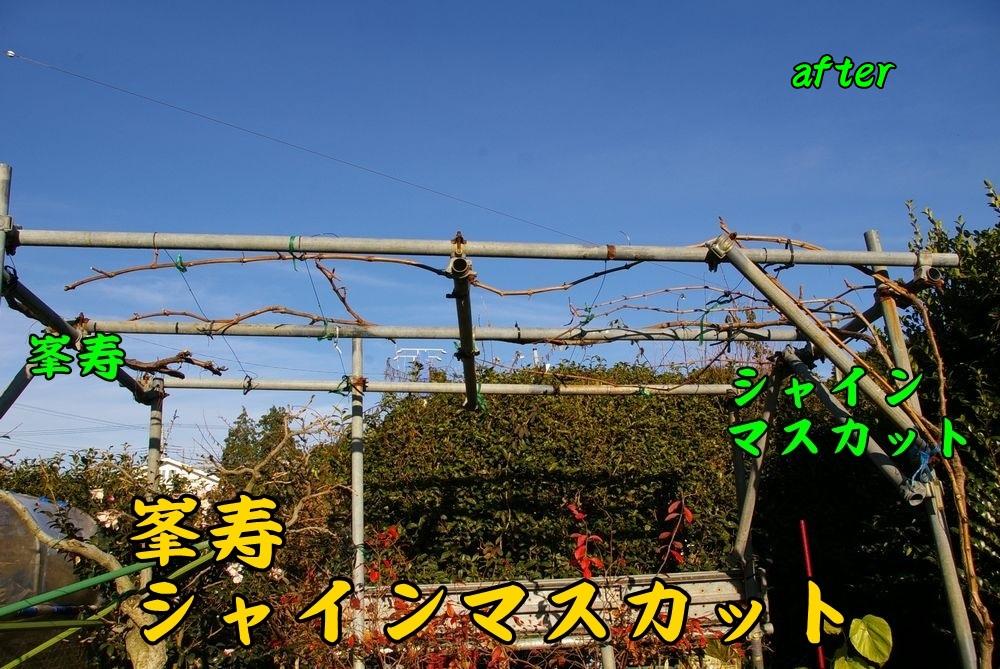 1syain1216c2.jpg