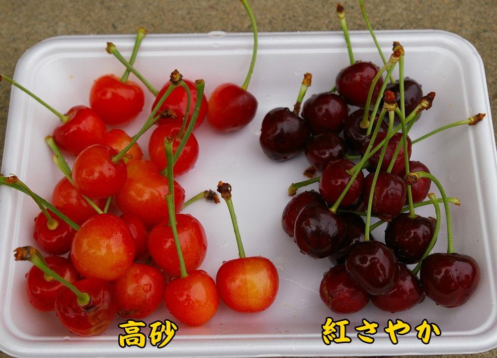 1taka_sayaka0606c1.jpg