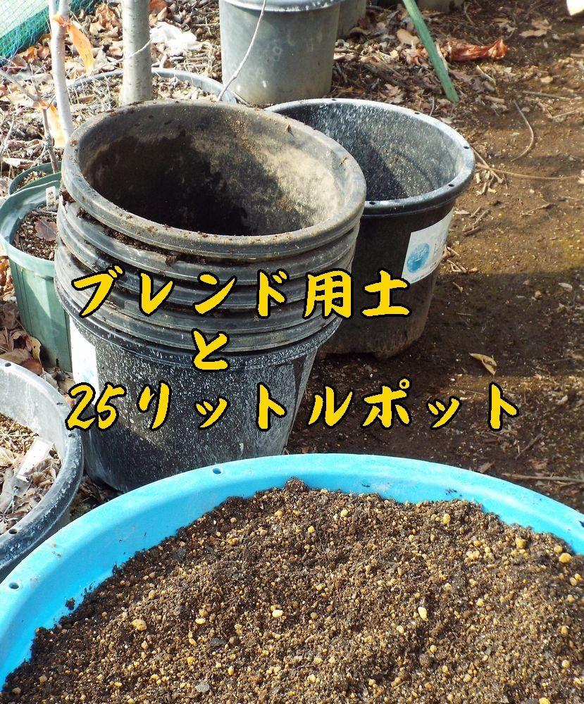 1youdo0110c1.jpg