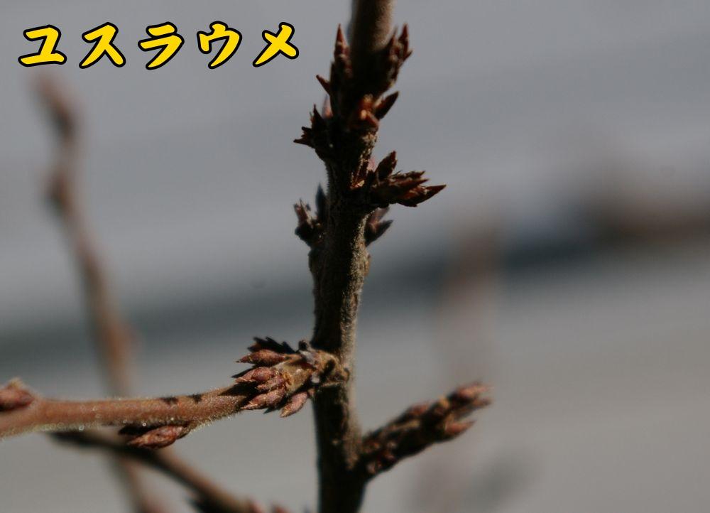 1yusura1228c1.jpg
