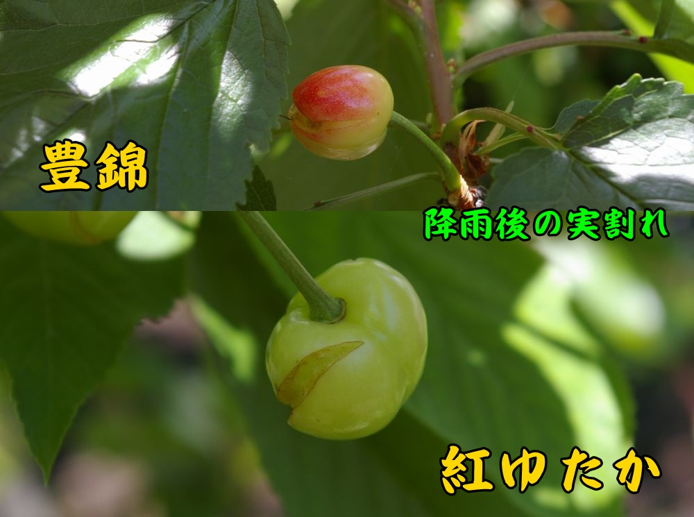 1yutaka_benic1.jpg