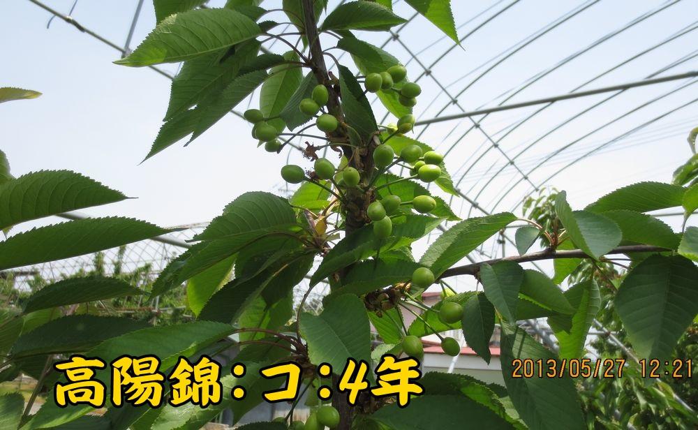 1a2高陽錦コルト台4年