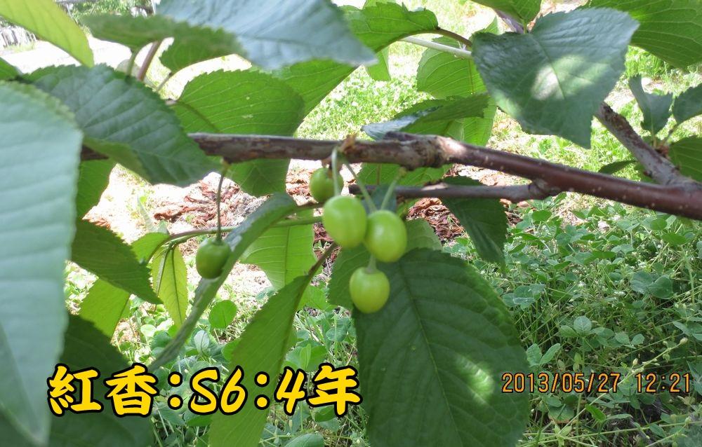 1a3紅香S6台4年