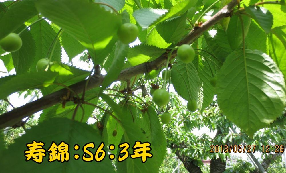1a14寿錦S6台3年