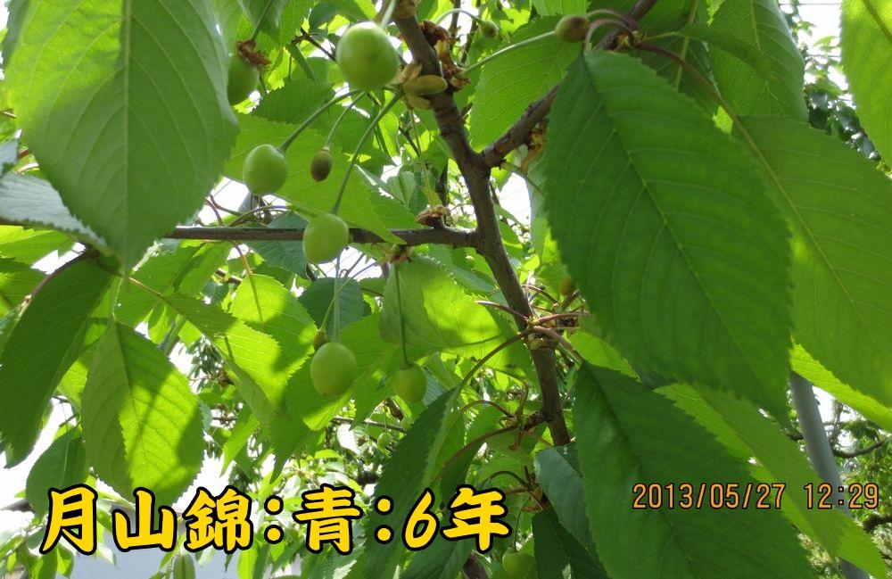 1a15月山錦青葉台6年