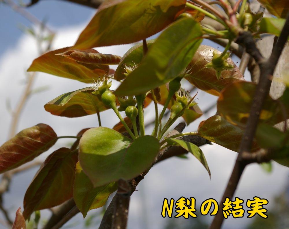 2Nnasi0404c1.jpg