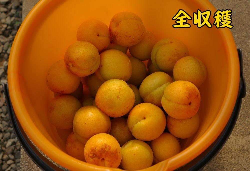 2heiwa0608c3.jpg