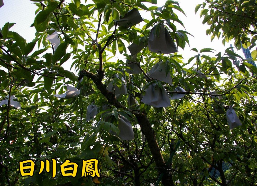 2hikawa0526c1.jpg
