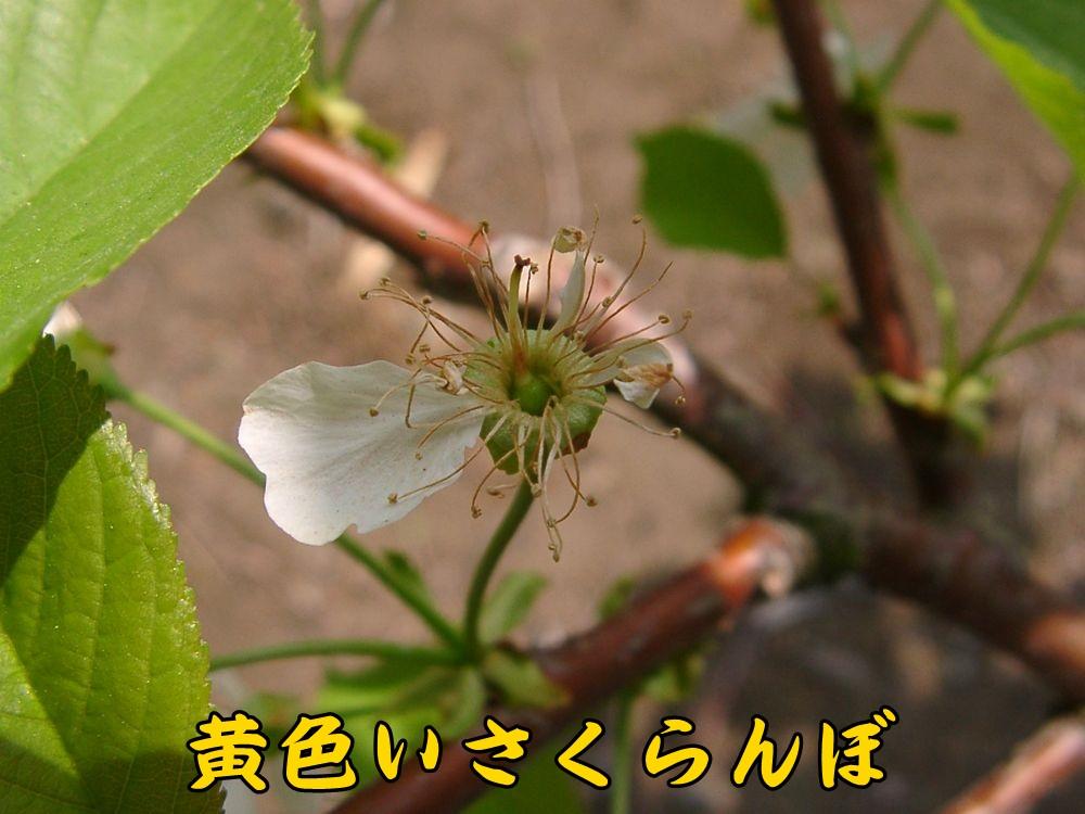 2kiroi0416c1.jpg