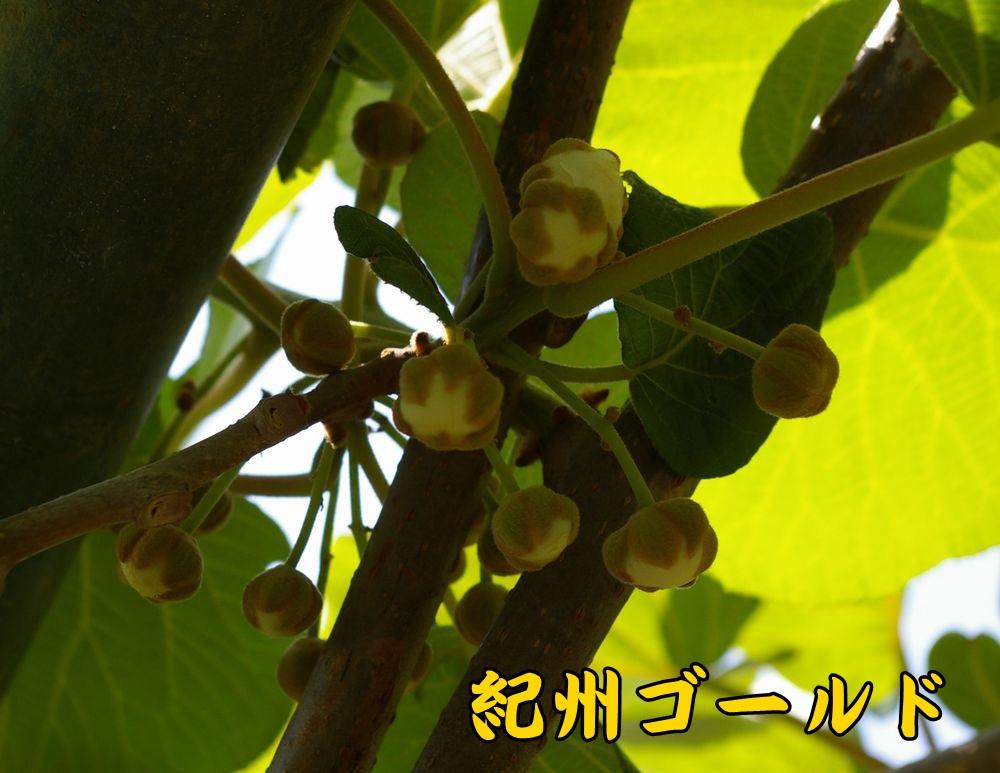 2kisyu0504c1.jpg