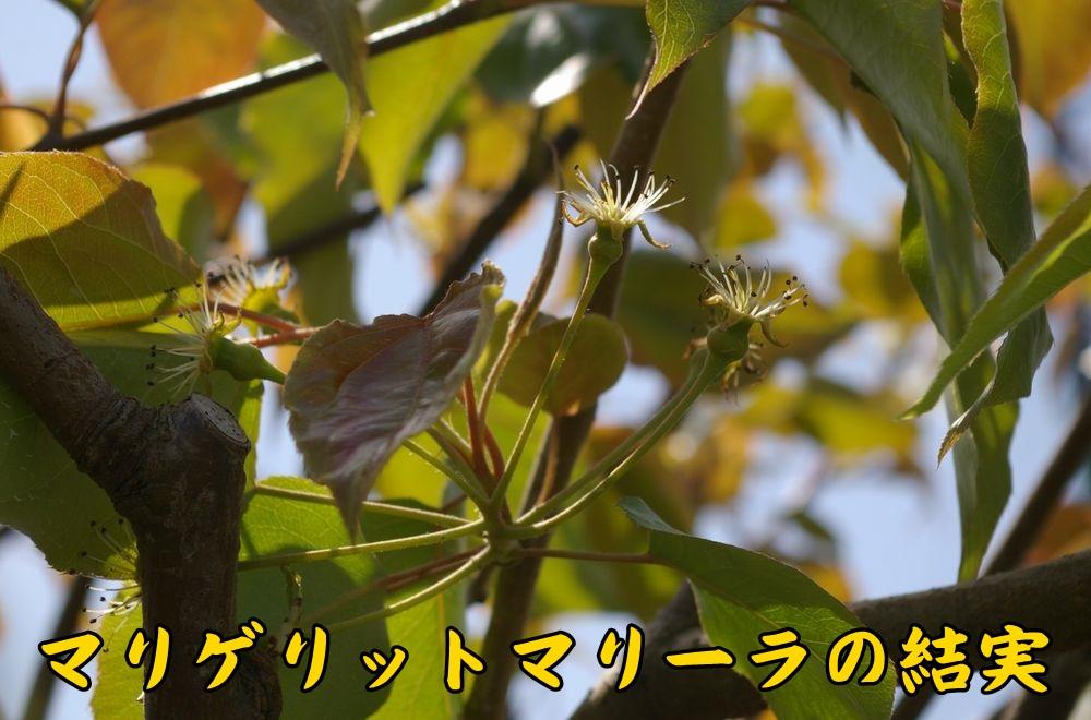 2mariget0404c1.jpg