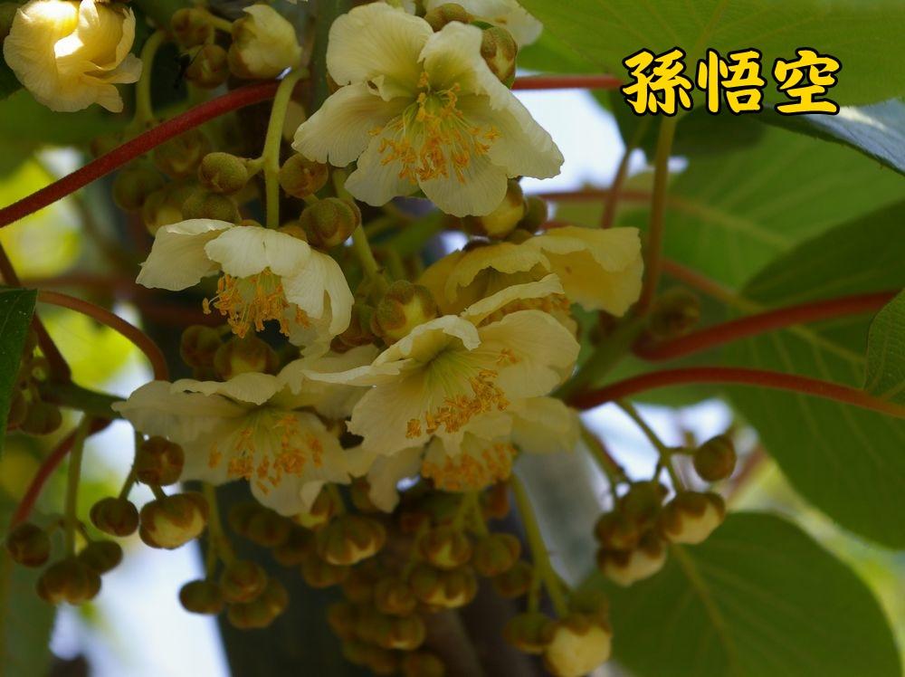 2songoku0504c1.jpg
