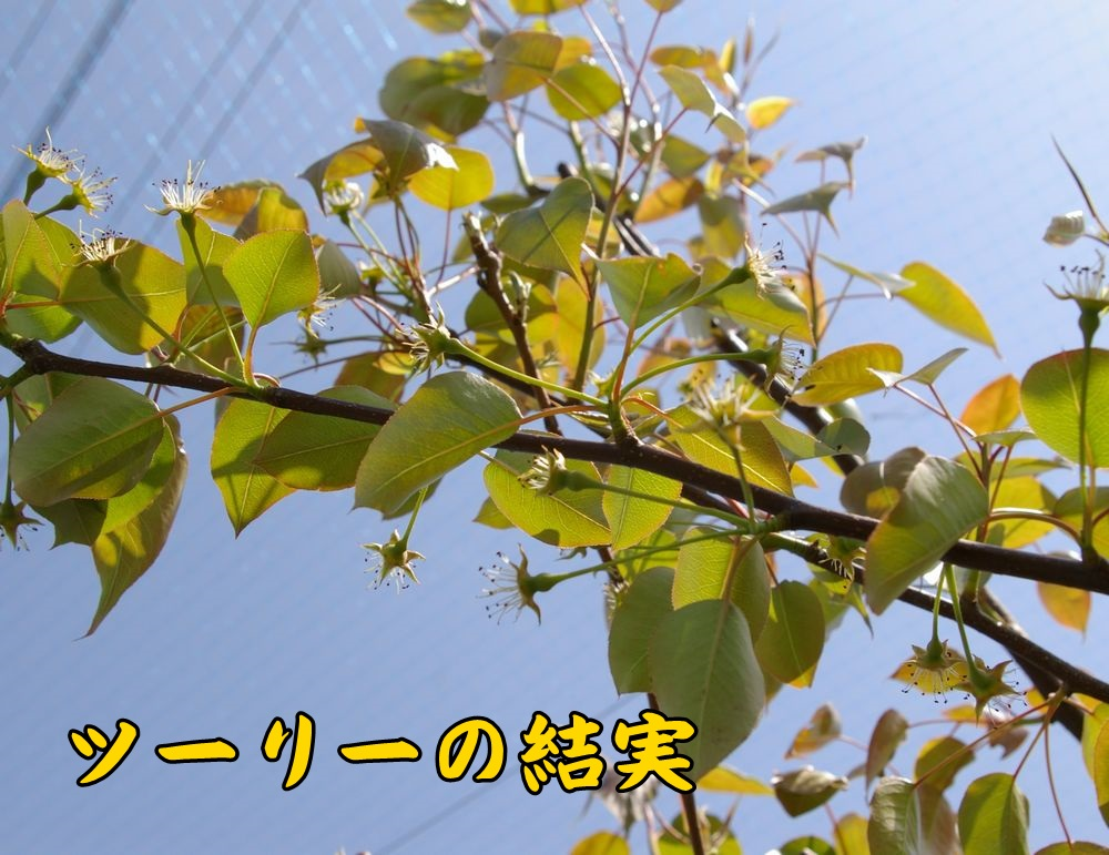 2tury0404c1.jpg