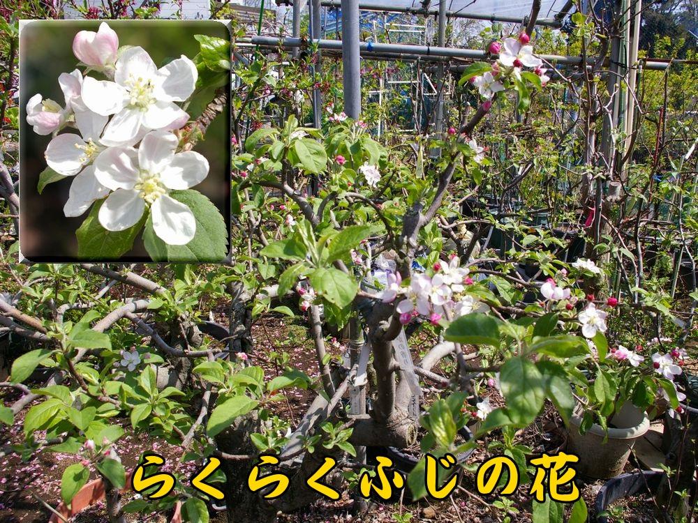 3rakufuji0404c1.jpg
