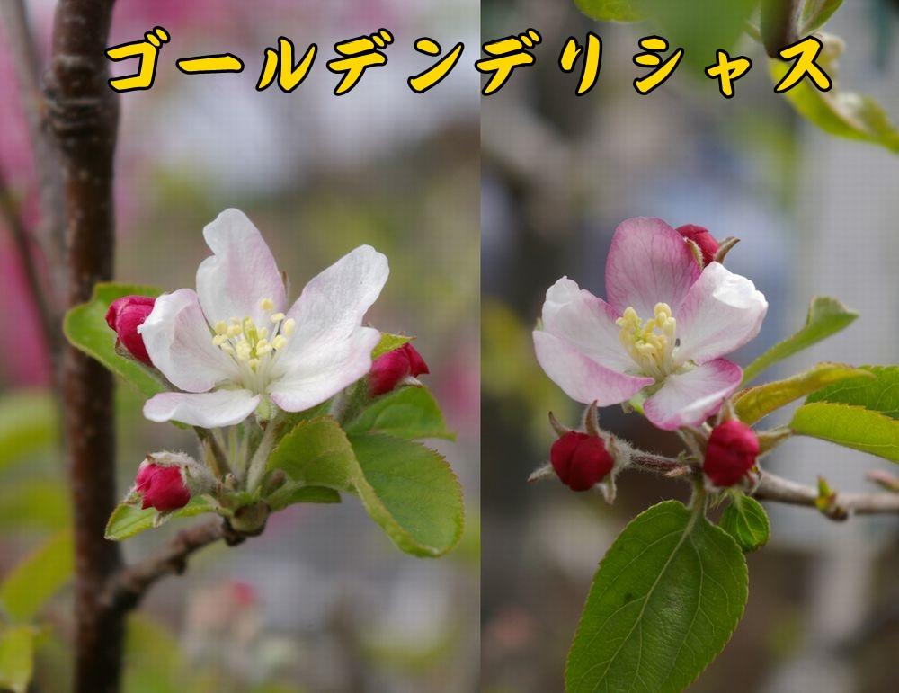 Gdeli0328c1.jpg