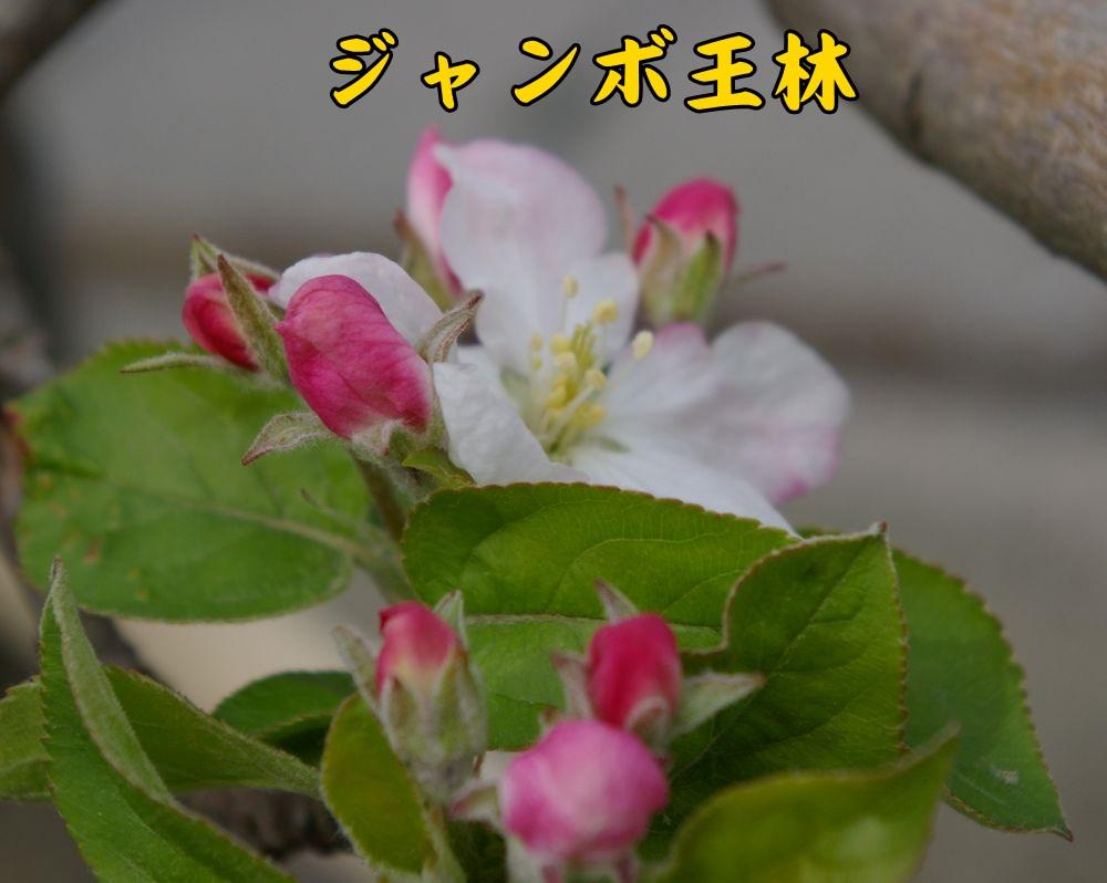 Jorin0328c1.jpg