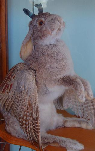 Jackalope-bird.jpg