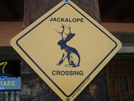 Jackalope-crossing2.jpg