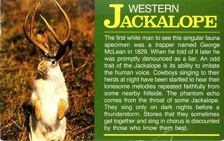 Jackalope-postcard.jpg
