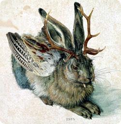 jackalope_rabbit4.jpg